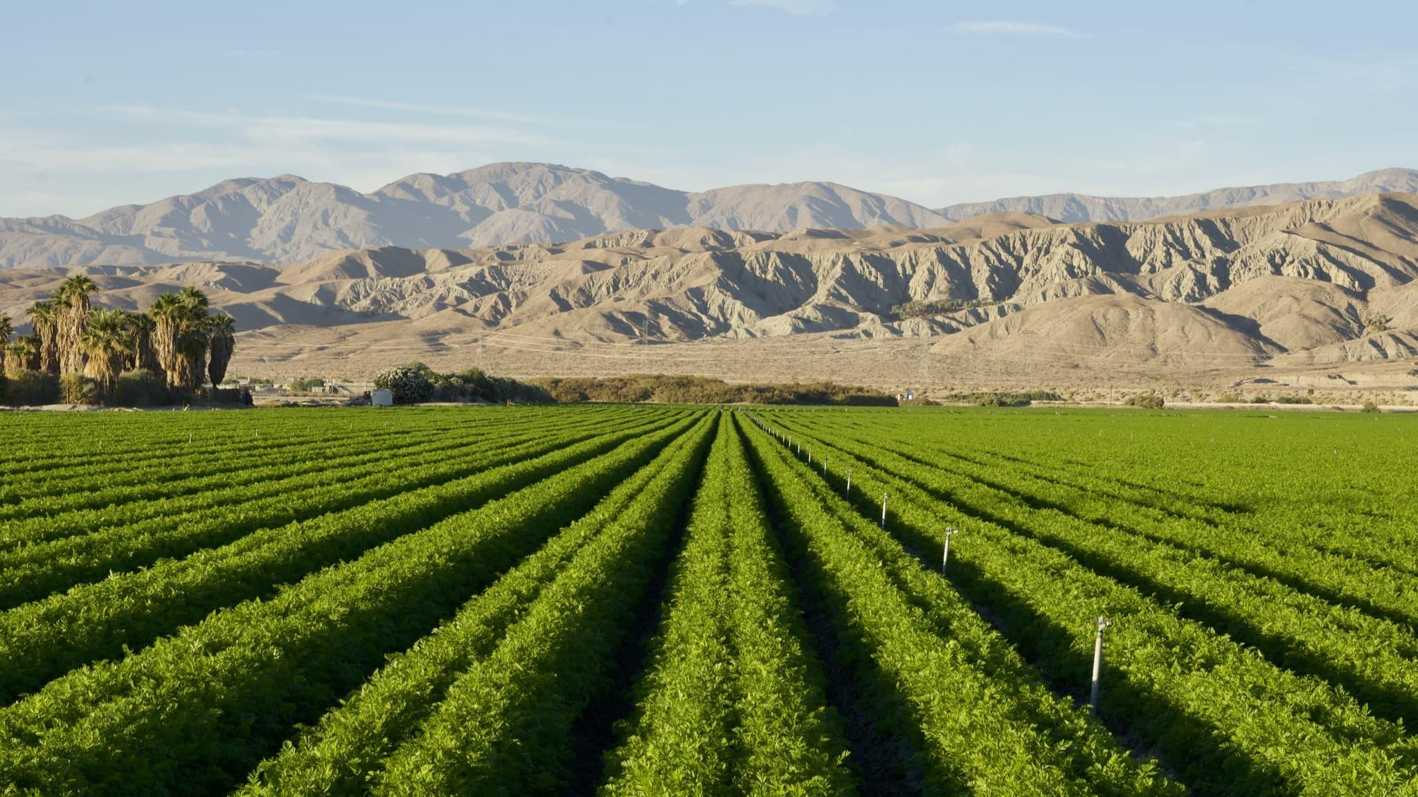 Rows of crops grown in imperial valley